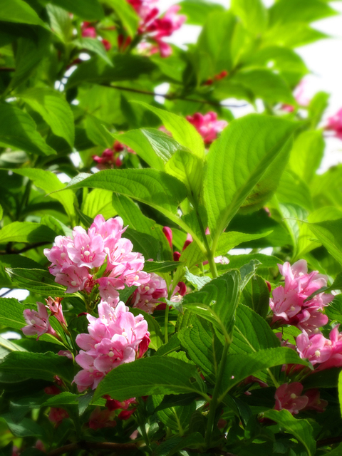 29㊱湯殿山途中樹花☆DSC01330s.jpg