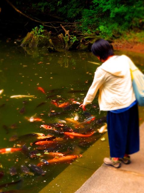 48善寶寺龍神堂前池の鯉s.jpg
